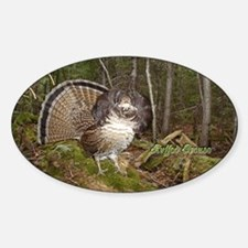 Strutting Grouse Oval Decal