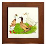 Egg and Meat Ducks Framed Tile