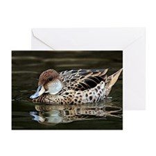 Yellow Billed Pintail Duck Greeting Cards