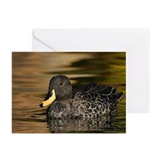 Yellow Billed Duck Greeting Cards