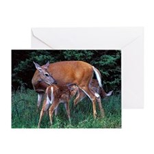 Whitetail Deer Doe And Fawns Greeting Cards