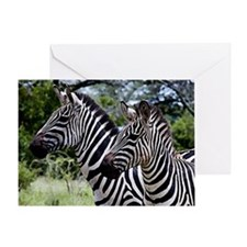 Zebra Portrait Art Greeting Cards