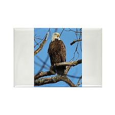 Bald Eagle on Guard Magnets