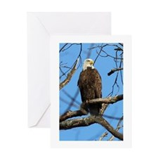 Bald Eagle on Guard Greeting Cards