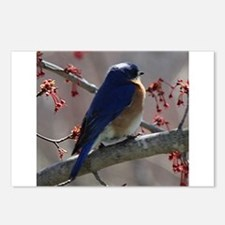 Bluebird Perching Postcards (Package of 8)