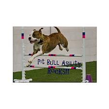 Pit Bull 25 Magnets