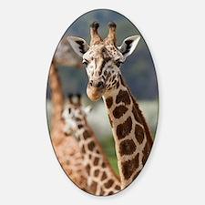 Giraffe Sticker (Oval)