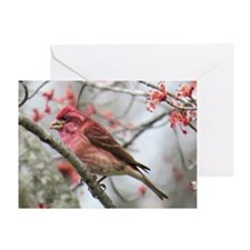 Purple Finch Greeting Cards
