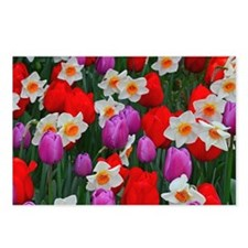Purple tulips and white daffodils garden Postcards