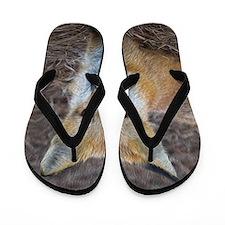 red fox Flip Flops
