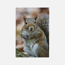 Cute Squirrel Rectangle Magnet