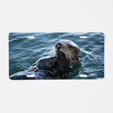 Sea Otter Eating Aluminum License Plate