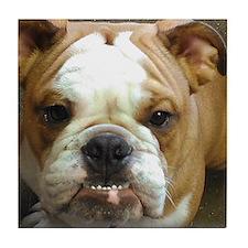 Bulldog Beauty Tile Coaster