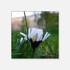 "White Macro Flower Square Sticker 3"" x 3"""