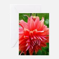 Deep Pink Dahlia Greeting Cards