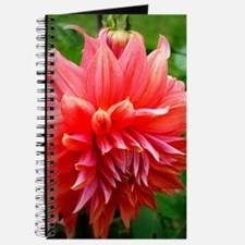 Deep Pink Dahlia Journal