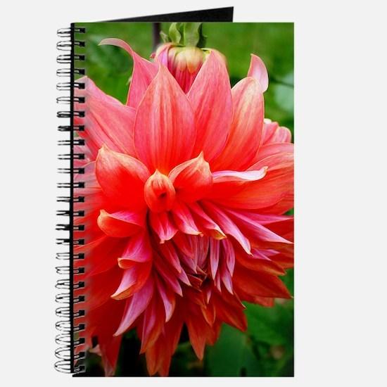 Deep Pink Dahlia Journal
