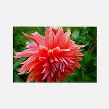 Deep Pink Dahlia Magnets