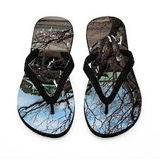 Omikuji tree Flip Flops