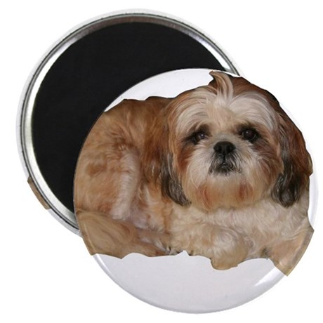 """It's all about the Shih Tzu. 2.25"""" Magnet (10 pack"""