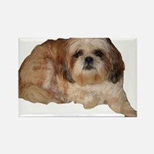 It's all about the Shih Tzu. Rectangle Magnet