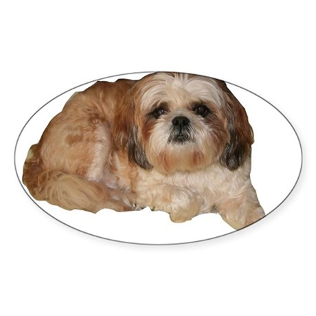 It's all about the Shih Tzu. Oval Sticker