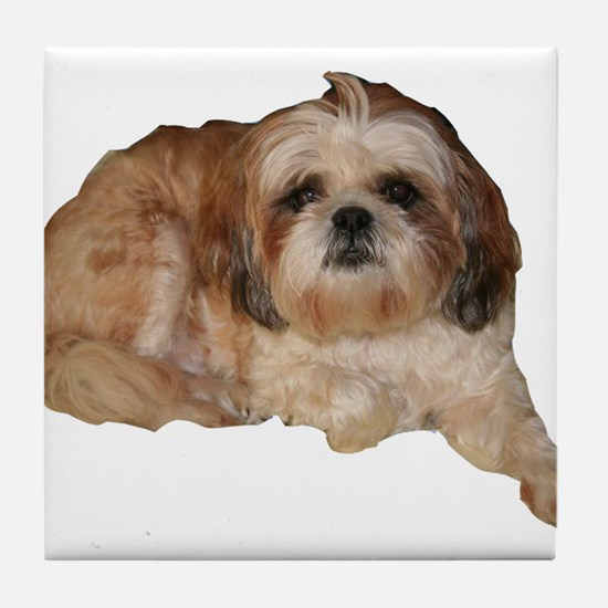 It's all about the Shih Tzu. Tile Coaster