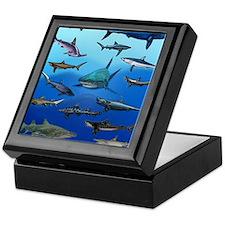 Shark Gathering Keepsake Box
