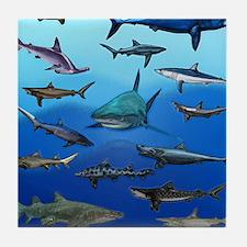 Shark Gathering Tile Coaster