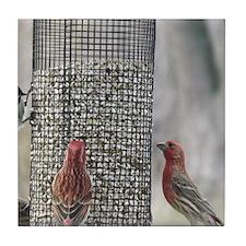 Wisconsin Birds at the feeder Tile Coaster