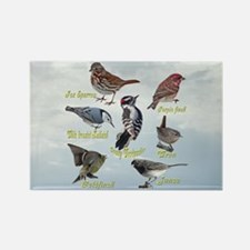 Backyard Birds Rectangle Magnet