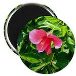 Hibiscus 2 Magnet