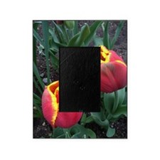 Flame tulips Picture Frame