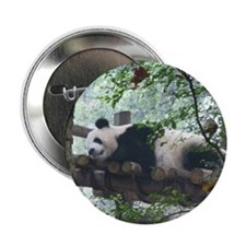 "Panda In A Tree 2.25"" Button"