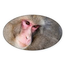 snow monkey face Decal