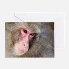 snow monkey face Greeting Card
