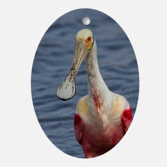 Spoonbill Portrait Oval Ornament
