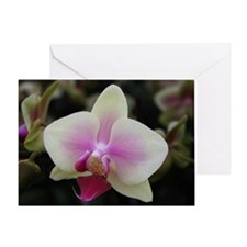 Yellow Phalaenopsis Orchid Greeting Card