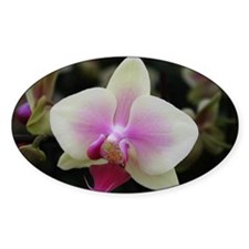 Yellow Phalaenopsis Orchid Decal