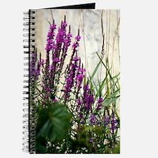 Wildflowers In Newport Vermont Journal