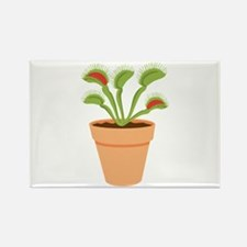 Venus Fly Trap Carnivorous Potted Plant Magnets