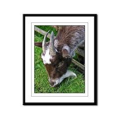 ...Goat... Framed Panel Print