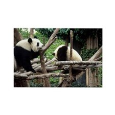 Panda mother with cub Rectangle Magnet