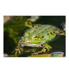 European Frog Postcards (Package of 8)
