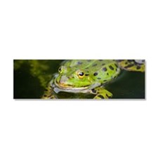 European Frog Car Magnet 10 x 3