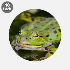 "European Frog 3.5"" Button (10 pack)"