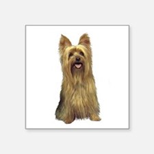 "Silky Terrier (B) Square Sticker 3"" x 3"""