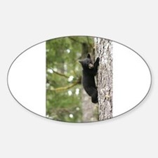 Bear Cub Decal