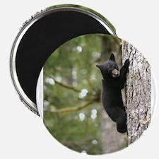 Bear Cub Magnets