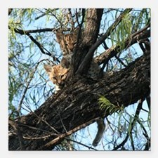 """Two Bobcat Kittens in Tree Square Car Magnet 3"""" x"""